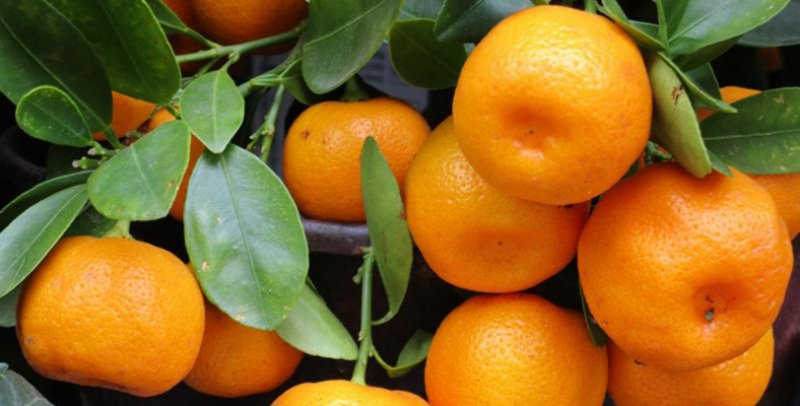 Mandarin: healthy fall fruit