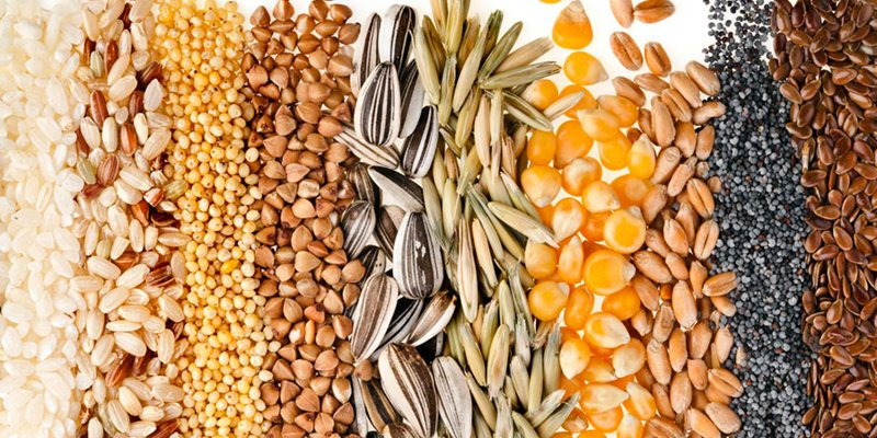 Seeds: a great source of nutrients