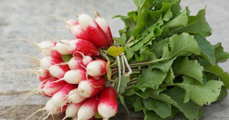 mercado de santa catalina productos de temporada Enero Rabanitos